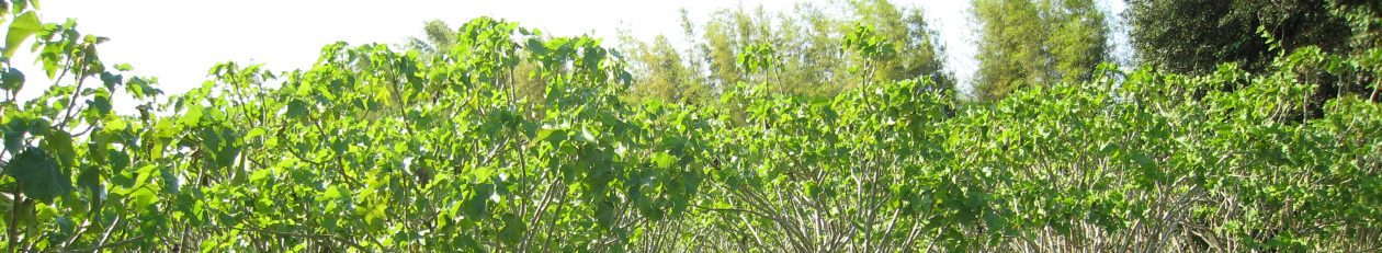 JATROPHA.PRO-YOUR KNOWLEDGEBASE ABOUT JATROPHA PRODUCTS AND PRODUCTION