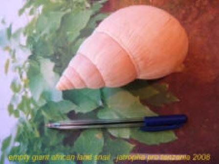 gians-snail.jpg