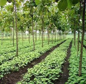 seedbed natural shade